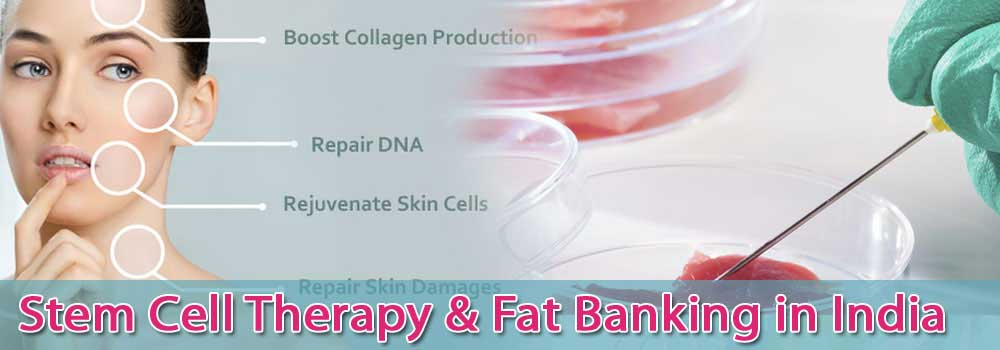 Low Cost Stem Cell Therapy And Fat Banking In India